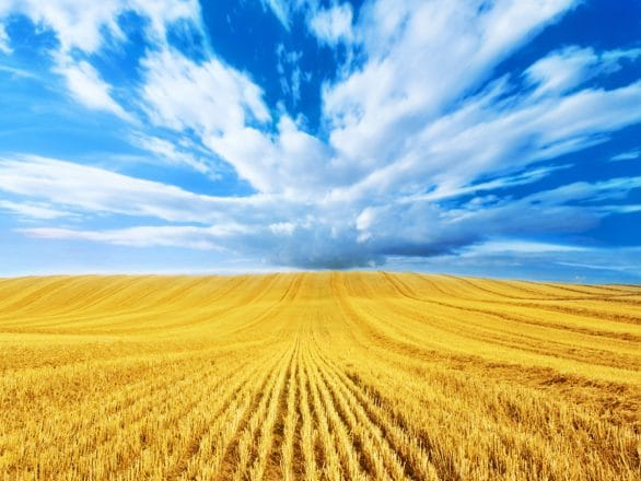 Field-of-Wheat-Backgrounds